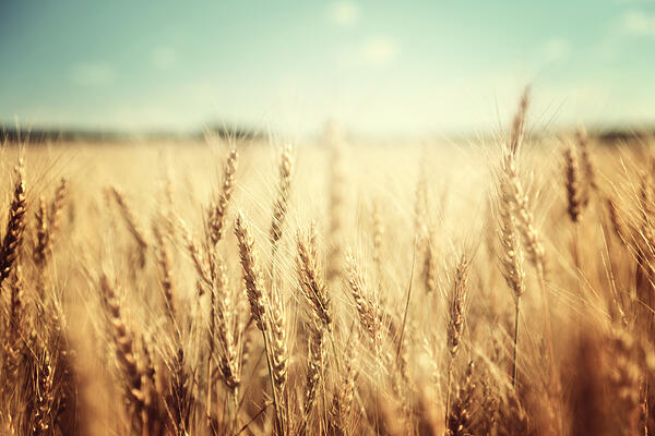 Property Documents Of Agricultural Land